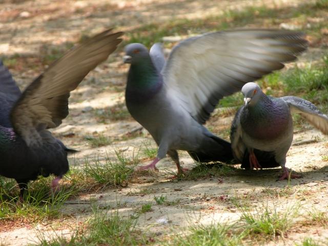 鳥害対策ネット